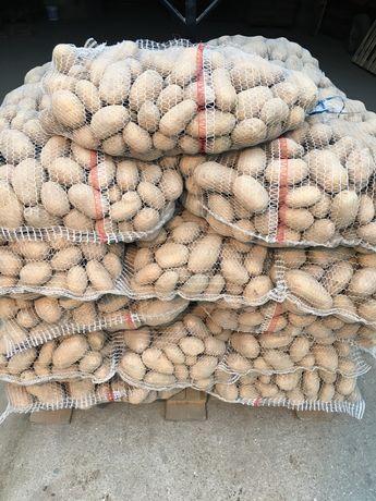 Ziemniaki jadalne Catania
