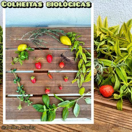 Plantas Biológicas