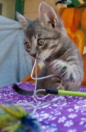 Милые котятки ищут семьи!