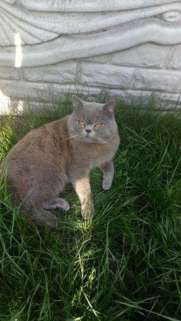 Потерялся кот. Помогите найти