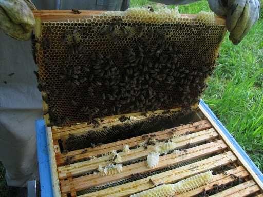 Propolis/ kit pszczeli PRYWATNIE. Większa ilość