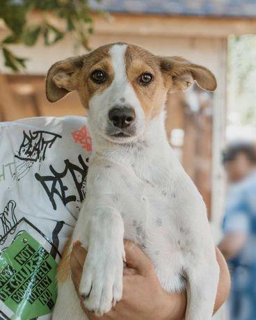 Стерилизованая собака даром щенок