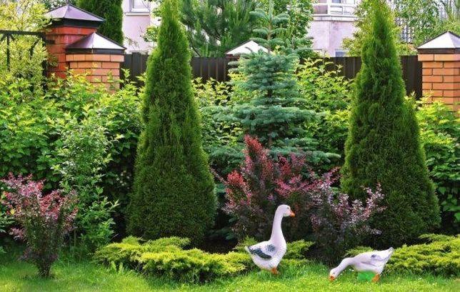 Благоустройство территории. Озеленение, ландшафтный дизайн. ДЕШЁВО