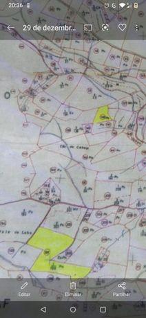 3 Terrenos viab. const.c.eucalip. Mação 1480 m2 , 1880 m2 e 9000m2
