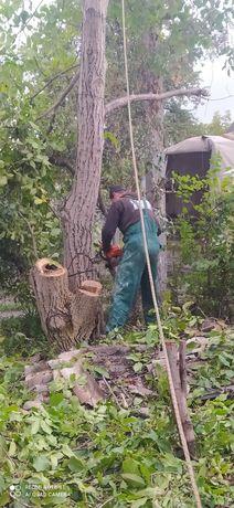 Спил и обрезка деревьев,сад.работы