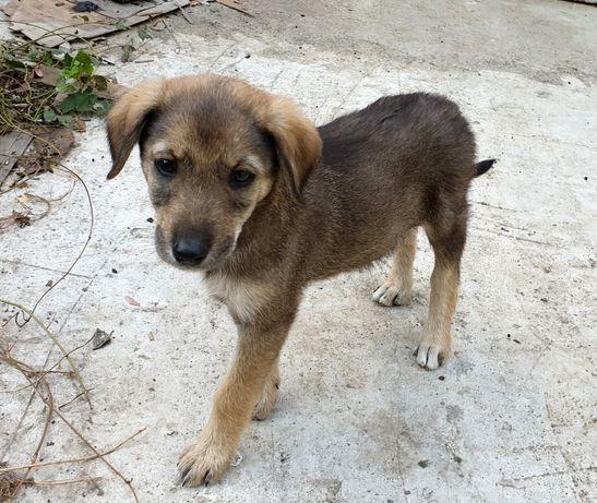 Малышу нужен дом, щенок около 2 месяцев