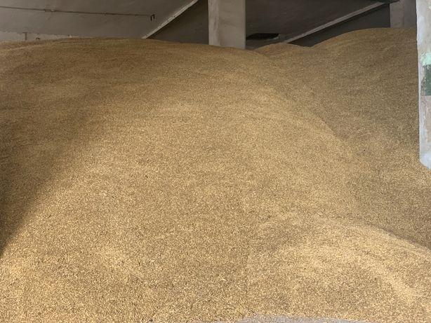 Jęczmień browarny/konsumpcyjny 100 ton