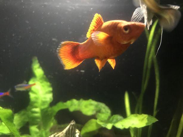 Рыбки аквариум обмен