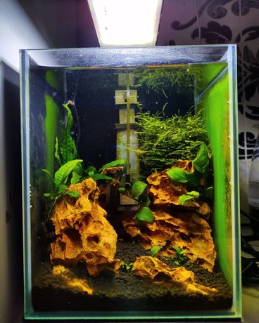 Akwarium Aquael shrimp set 10 krewetkarium Dragon Stone