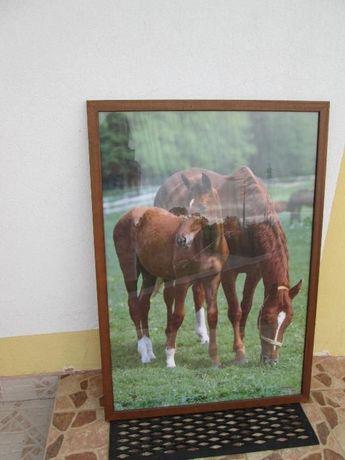 Quadro de cavalos