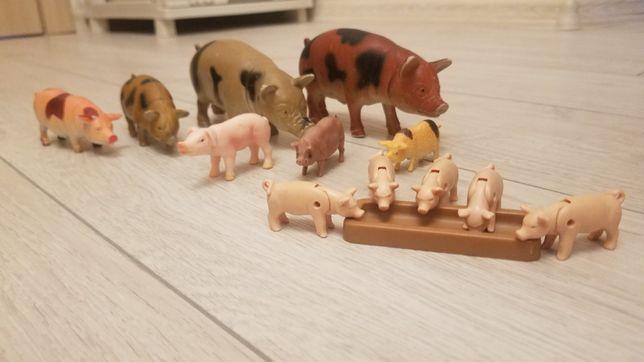 Тварини.Домашні свині.