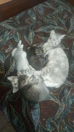 Одам котят ,в добрые руки игривые, в лоточек ходят, кушают сами.