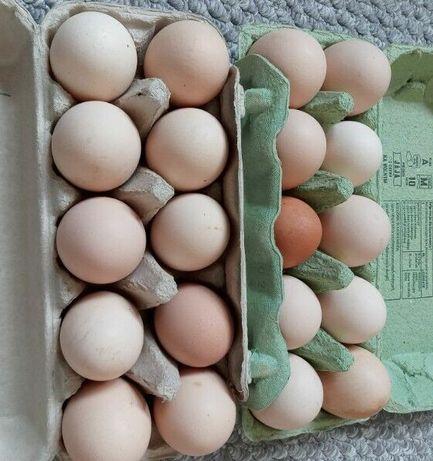 Jajka wiejskie od gospodyni, z wolnego wybiegu