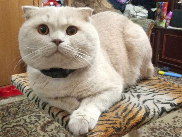 Кот ищет кошку для вязки