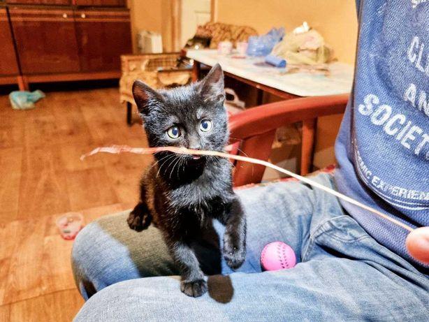 Игривая кошечка Пантерка :-)