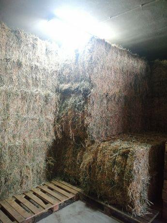 Fardos de Luzerna grandes