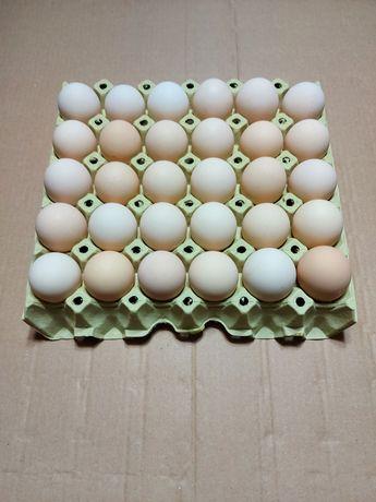 Jaja wiejskie, kremowe, wolny wybieg