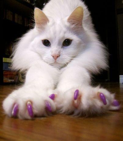 Антицарапки золото. Для кошек