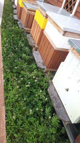 Pszczoły odkłady pszczele