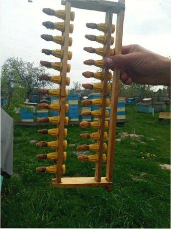 Пчелиные матки F1 Скидки! Отправляю. «Карпатки». Плідна