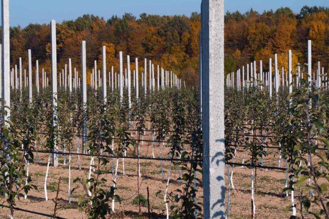 Продам бетонные столбики для садов, виноградников, оград