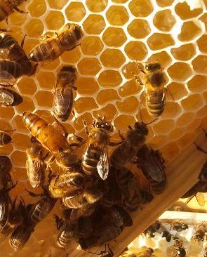Matki pszczele Buckfast bakfast 2021 FVAT