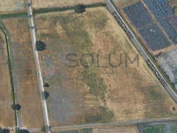 Terreno misto - 3 hectares no Jardia/Montijo