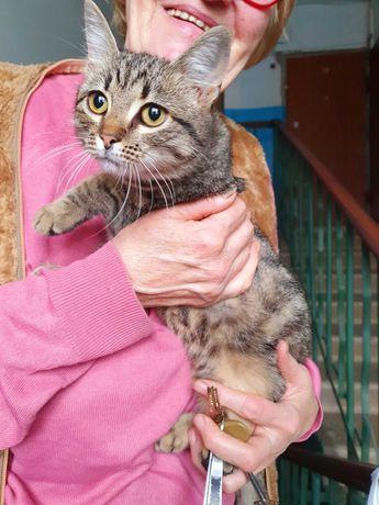 Котенок девочка в хорошие руки котята