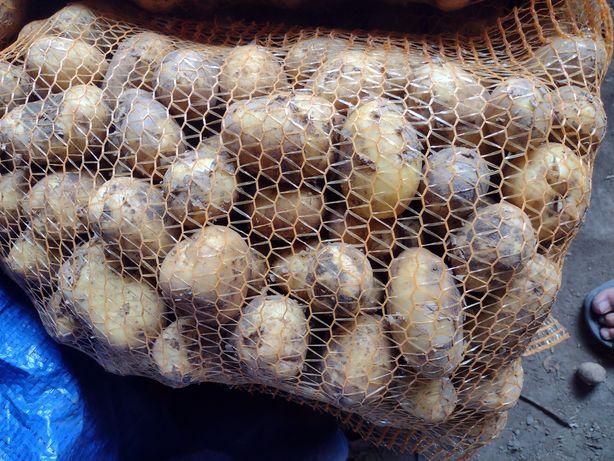 Ziemniaki jadalne młode odmiana denar lord gala