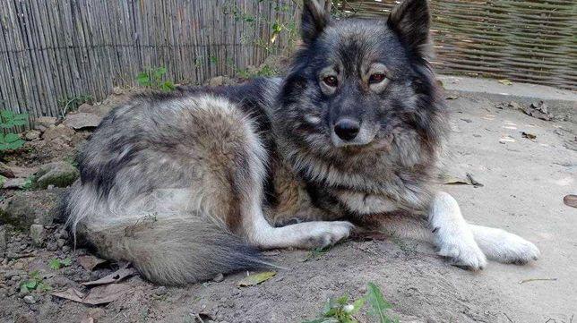 Собака, 5 років, сторож, Шукає нову домівку