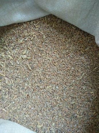 Пшеница, ячмень, кукуруза, семечка