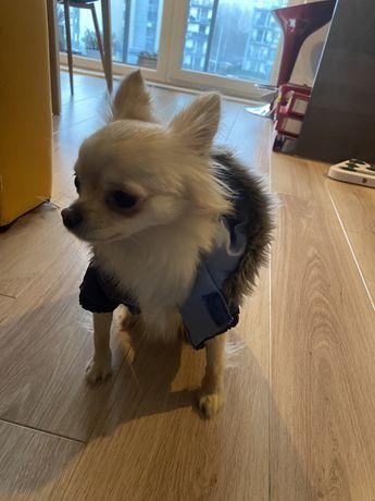 Kurteczka dla psa zimowa XS