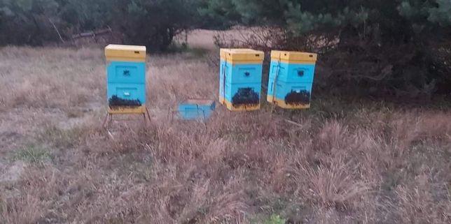 Sprzedam pszczoły lub ule
