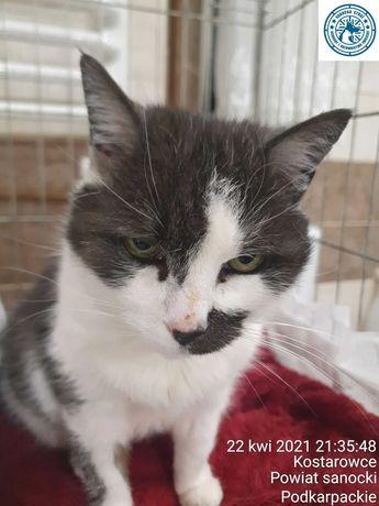 Kot pokrzywdzony przez los ;( lukrecja szuka domu