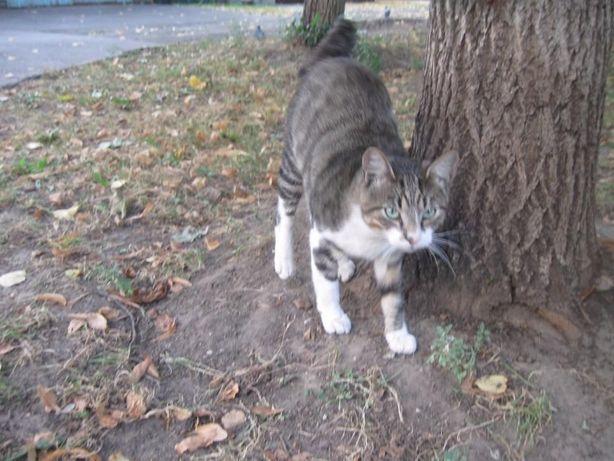 Отдам кота лесного окраса. 8 месяцев