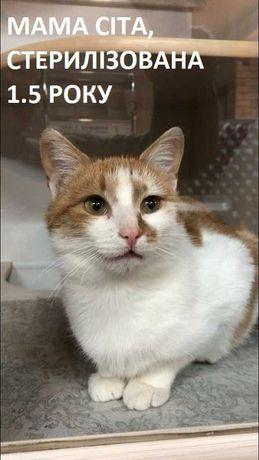 Котики, кішечки, кошенята в добрі руки