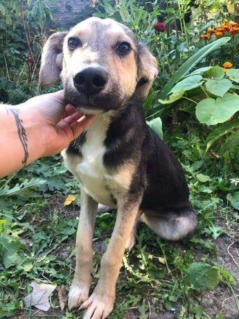 Собачка з зони АТО шукає дім, собака, цуцик