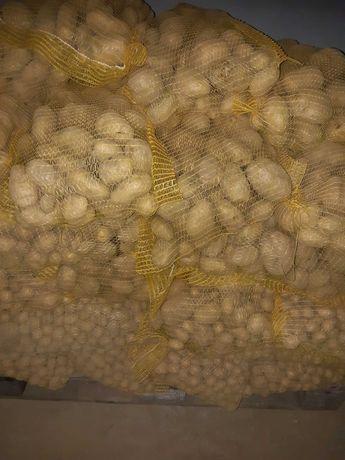Ziemniaki paszowe drobne Małopolska