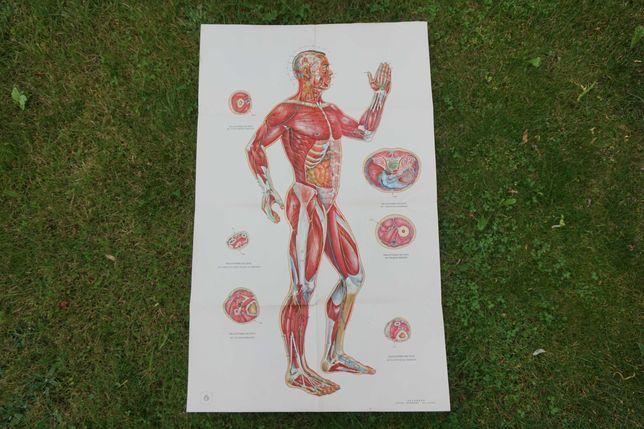Tablica plansza medyczna plakat akupunktura 106cm x 66cm DUŻY vintage