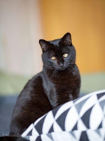 Спасите из приюта доброго ласкового трогательного кота кастрирован