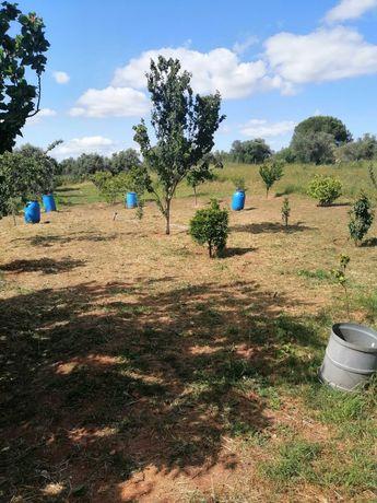Vendo terreno agrícola com 10000m2