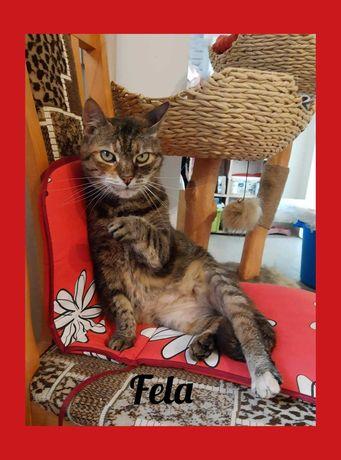 Fela bura sympatyczna kotka