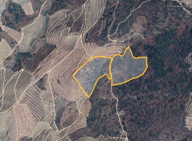 Terreno 32500 m2 perto Rio Douro