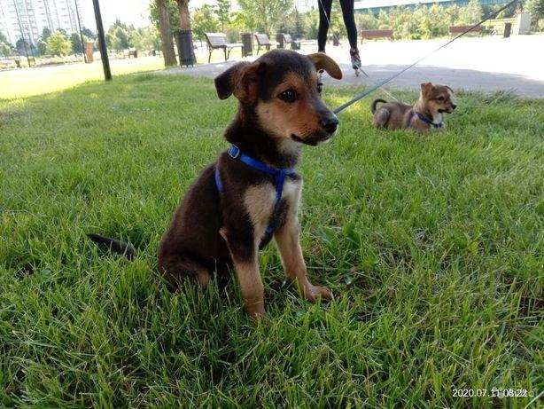 Щенок 3 месяца РАФ собака пёс щеня собачка песик
