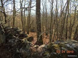 carvalhos e eucaliptos Mangualde, Mesquitela E Cunha Alta - imagem 1