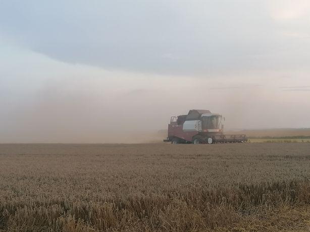 Koszenie kukurydzy zbiór usługa