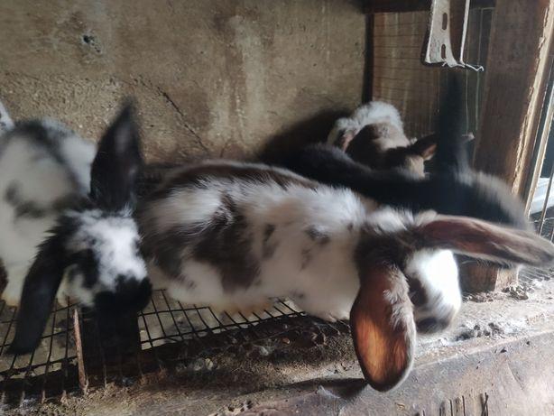 Продажа кролей, мяса и вязка