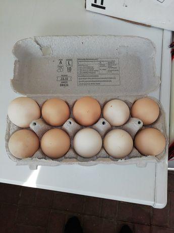 Jaja wiejskie dowóz gratis na terenie Iławy