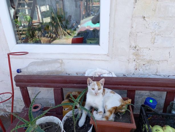 Кошенята слухняні