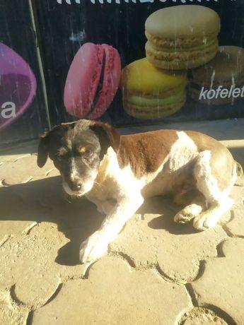 Найден пёсик на Бабурке